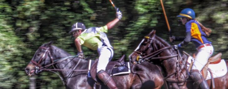The Care of a Polo Pony