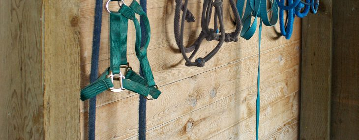 5 Things to Know Before Boarding Your Horse