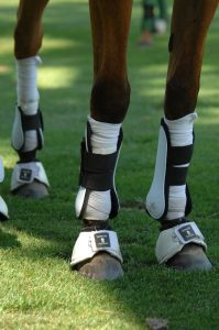 polo pony leg protection