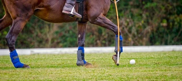 Polo For Parkinson's