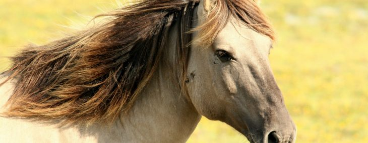 Does Your Horse Have Spring Allergies?