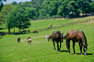 Chukkar Farm Polo Club | Horses in Pasture