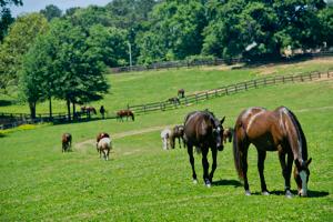 Chukkar Farm Polo Club | Horses in Pasture